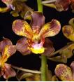 aloha-flower