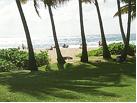aloha-trees